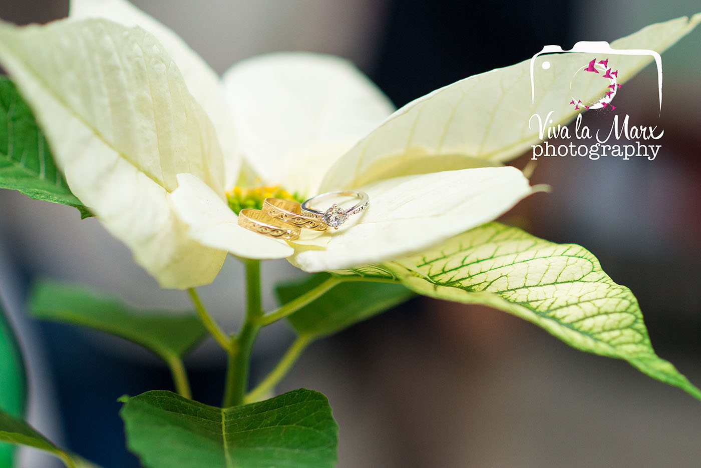 En la boda decembrina, no faltan las noches buenas. In this December Wedding, these white poinsettia flowers could not be left out, perfect to show off the wedding rings, for memories of all the details that went on for this wedding.